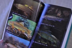 Fish book